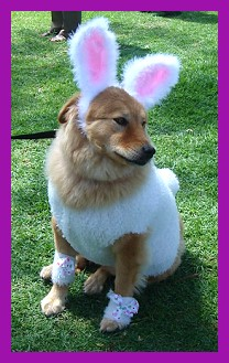 Bunny costume for dog