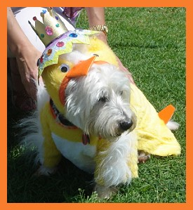 chicken costume for dog