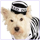 Prisoner Dog Costume, Small
