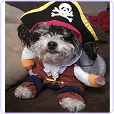 Caribbean Pirate Pet Halloween Costume