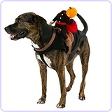 Headless Pumpkin Rider Dog Costume