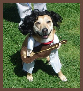 Puppy with guitar! Cool two legged dog costume