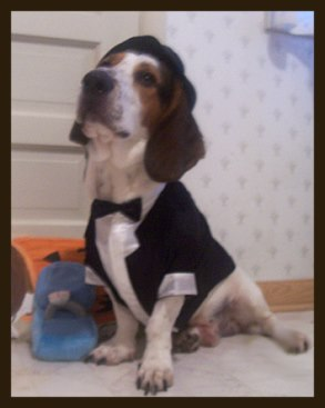 Dog dressed as a groom