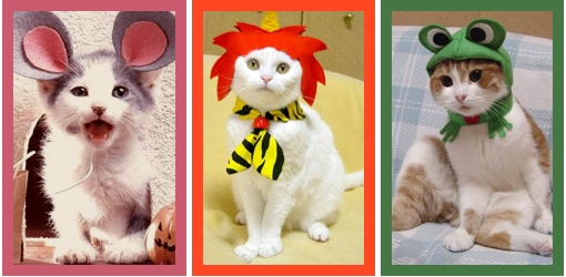 Cat Costumes - Homemade Costumes for Cats