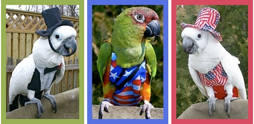 Parrots in Costumes